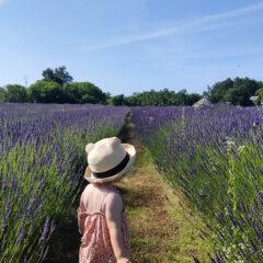 Izlet u prirodu s djecom – miris avanture u poljima lavande